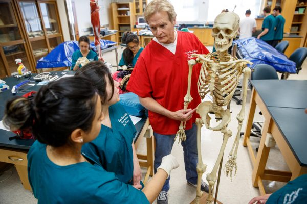 Professor showing students wearing scrubs a human skeleton